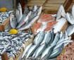 Fisch-gesund